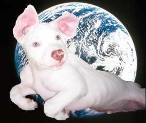 Even kyute in outer space ware no wun kin heer you say Awwww!!